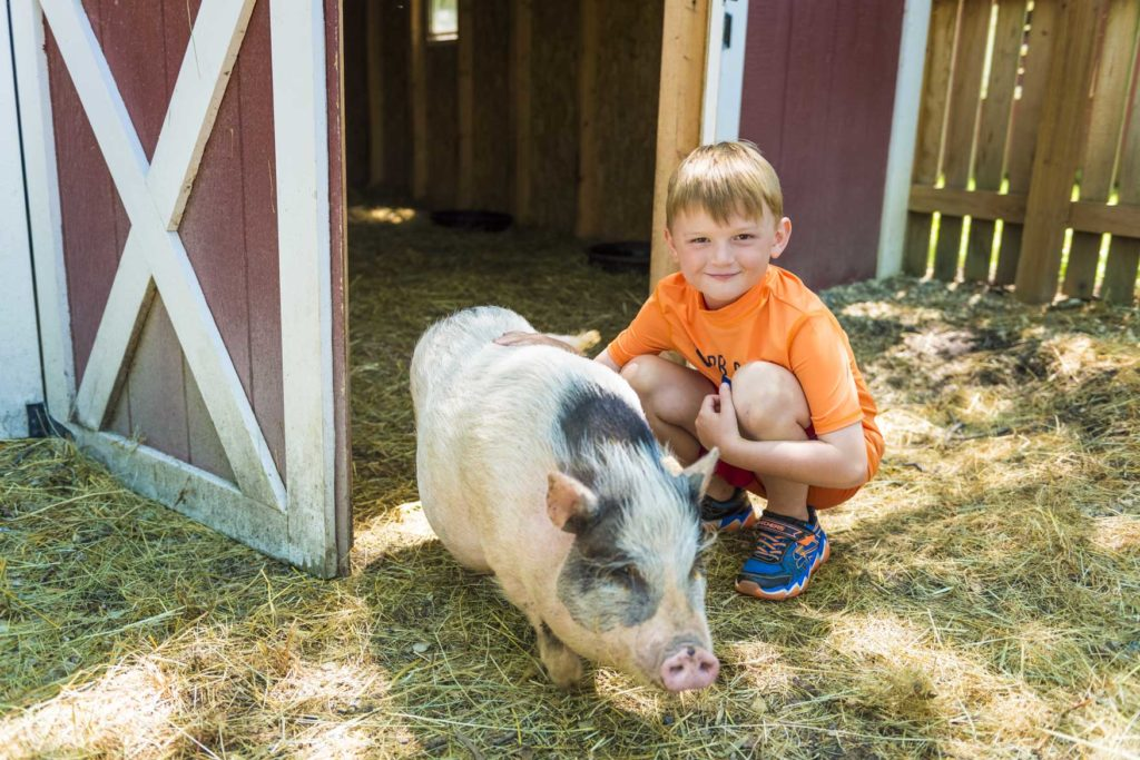 A young boy and a pig